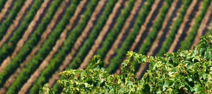 Nu in ons assortiment: de wijnen van Illuminati