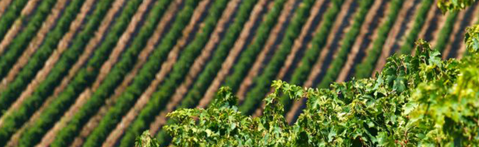 Nieuw: de wijnen van Illuminati